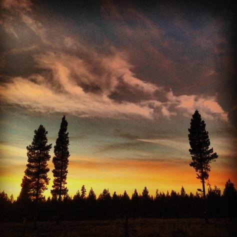 sunset in LA Pine
