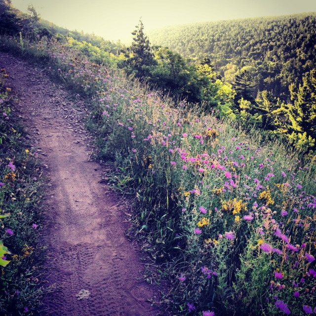 8.7.13. b. perfect soft trails