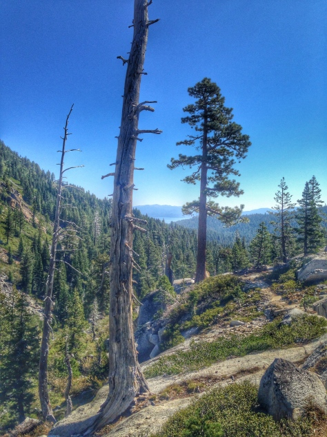 General Creek Trail back towards Sugar Pine Point