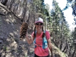 the biggest pinecone ever