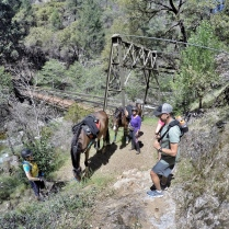 newly built Swinging Bridge with cool horses and cool riders