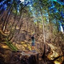 the giant stump- Deadwood