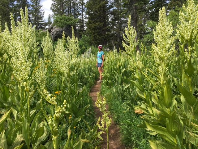 super tall flowers on the DLRT just before the PCT