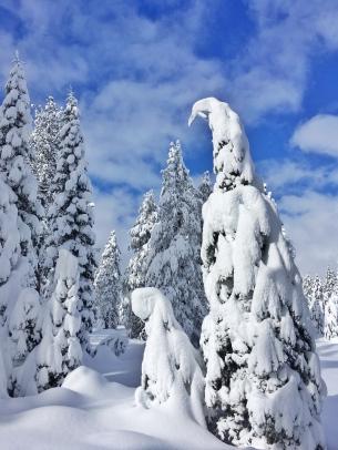 Sawtooth Trail '17