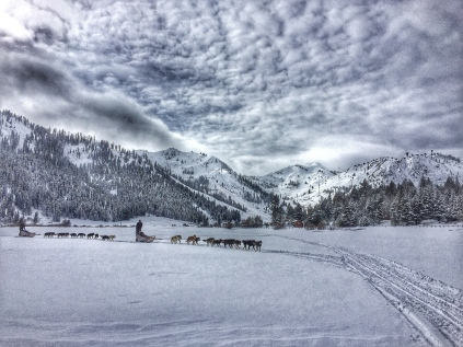 Squaw Valley '16 - sled dog tours