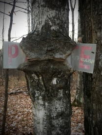 sign-eating trees